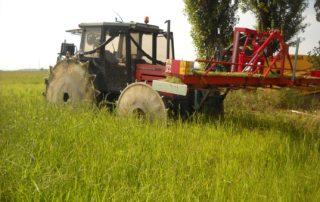 eliminare le erbe infestanti nel riso biologico