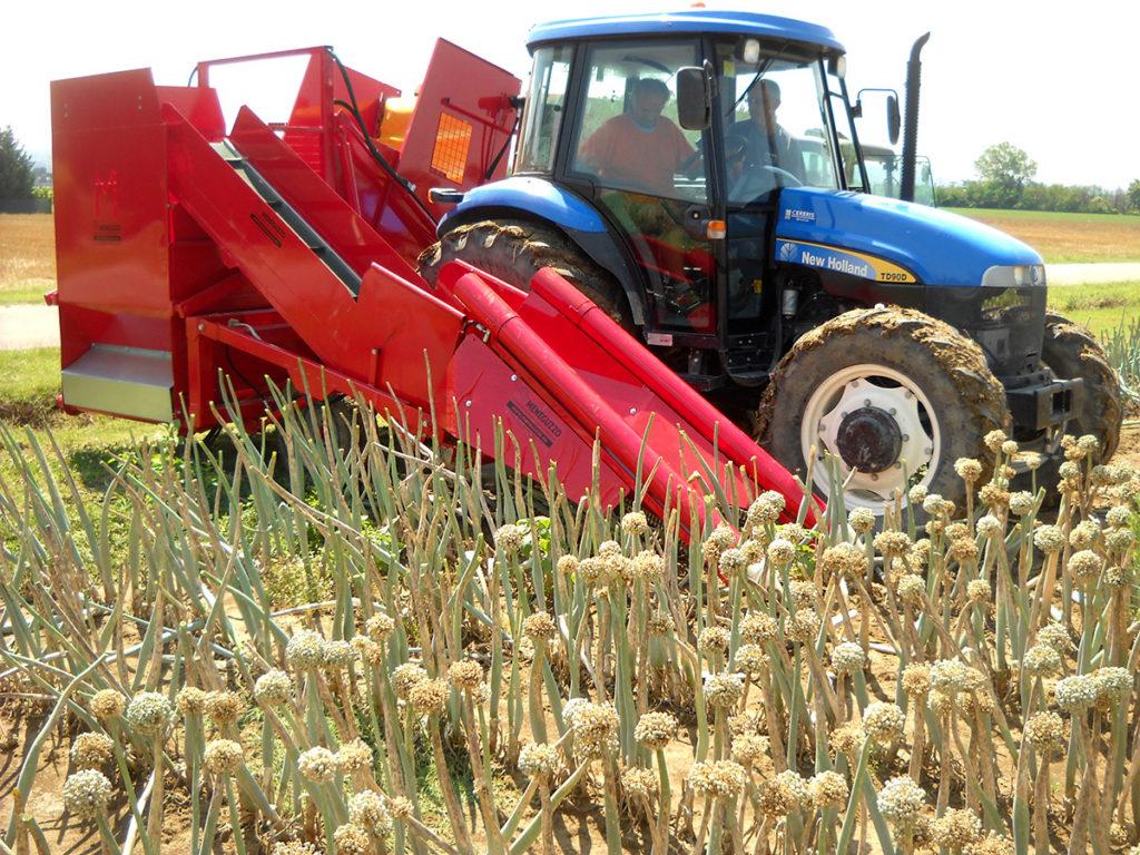 cipolla da seme, macchina per la raccolta