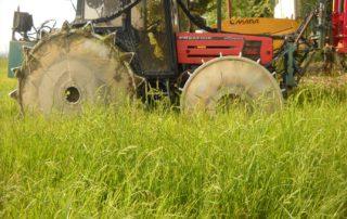 eliminare il riso crodo